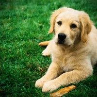 Top tips to protect your pet from worms