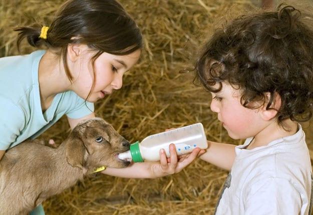 Family Farmstay