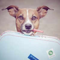 Pets on holiday...cheaper to fly than say goodbye?