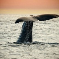 5 of the best whale watching spots in Australia