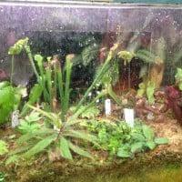 Fish tank makeover