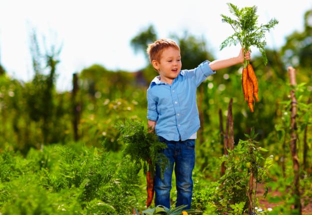 SS_raise_kids_high_food_IQ_625x430