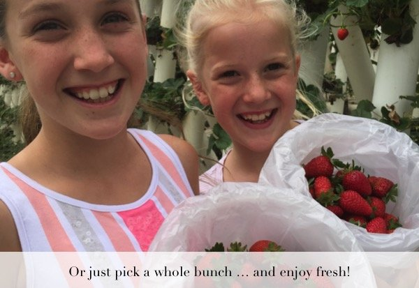 pinch-a-whole-bunch-of-strawberries-and-enjoy