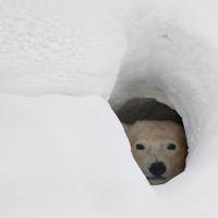 Video: Polar bear cub enjoys a bath