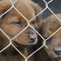 Five important things to be aware of when buying a puppy online