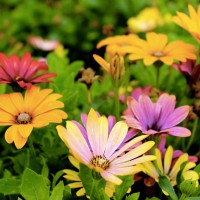 Heavenly Garden: 7 Flowers That Will Make Your Backyard Smell Amazing