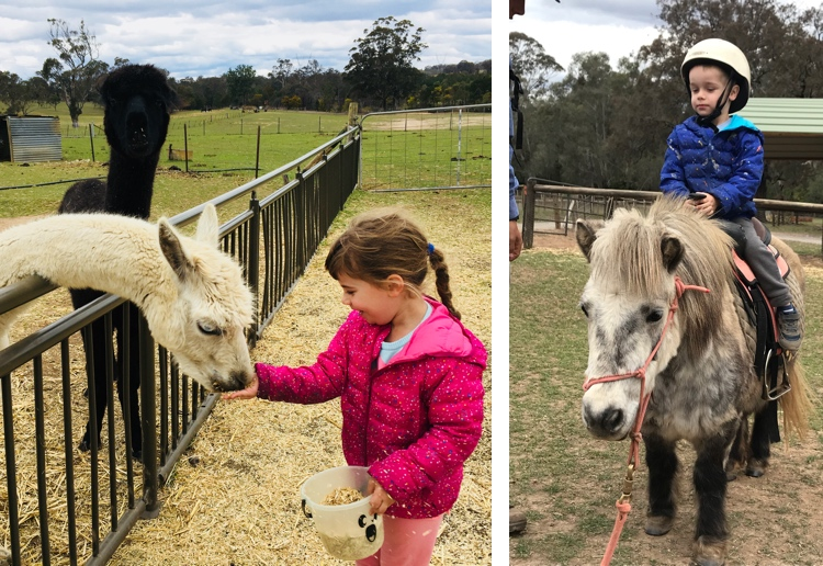 Win A Family Day Visit To Mowbray Park Farmstay