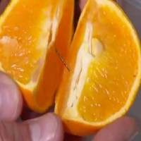 Latest New Case of a Needle Found in Fruit