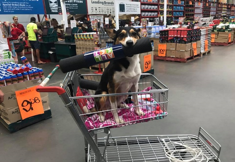 Pet Owners Divided Over Bunnings Dog Rule