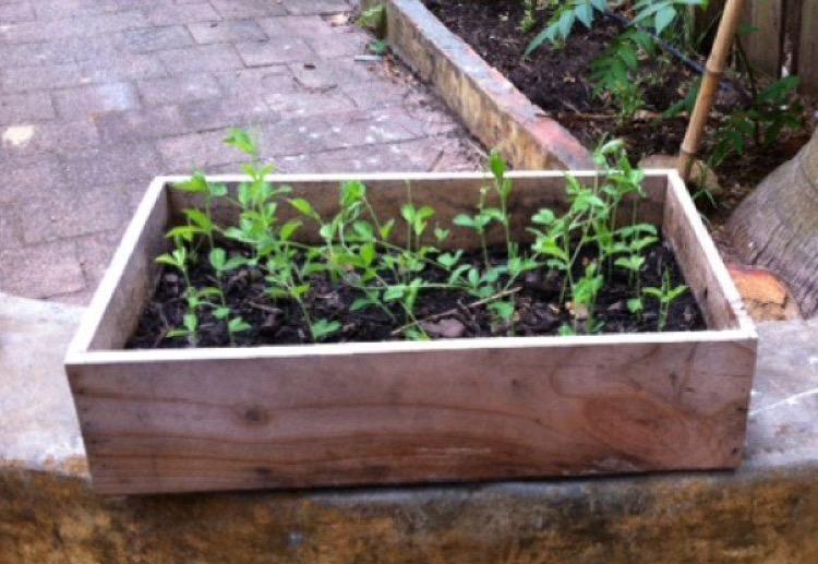 DIY plant box