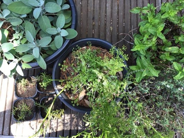 Garden Design Garden Design with Ways to Start an Indoor Herb